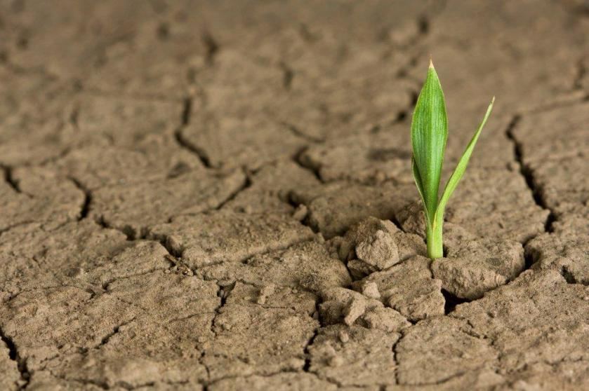 sprout-in-dry-soil