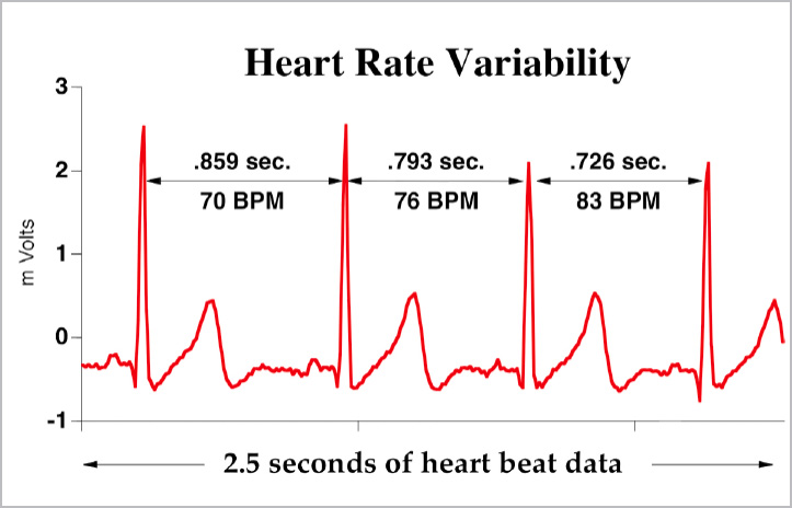 Image result for heart rate variability